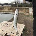 うっちーうっどぺっかあさんの埼玉県大里郡での釣果写真
