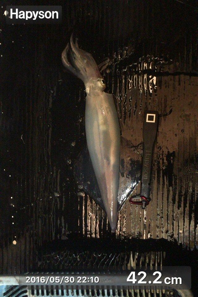 ミッチーさんの投稿画像,写っている魚はケンサキイカ