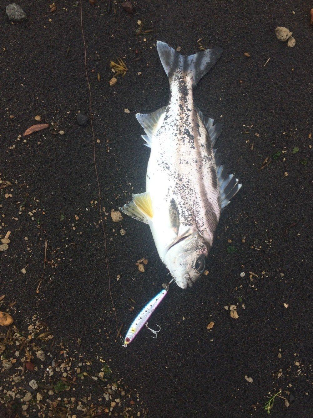 まーつさんの投稿画像,写っている魚はコトヒキ