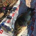 まるしん釣り具さんの埼玉県久喜市での釣果写真