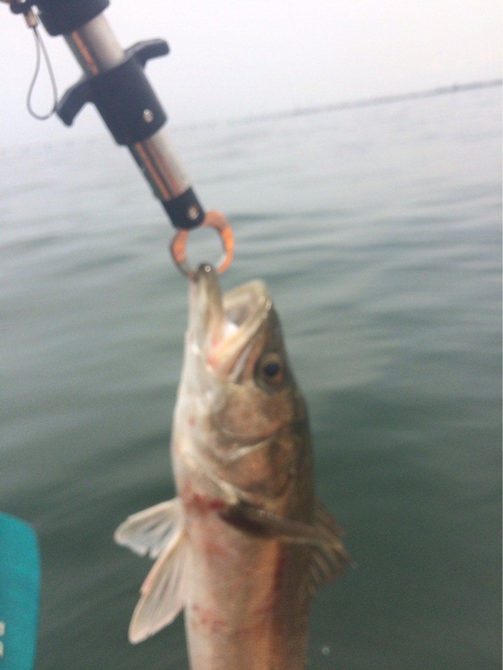 内野坊さんの投稿画像,写っている魚は