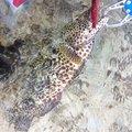 シーアツさんの沖縄県八重山郡での釣果写真