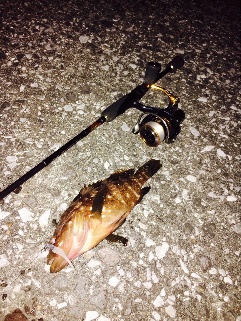 カメさんの投稿画像,写っている魚はキジハタ