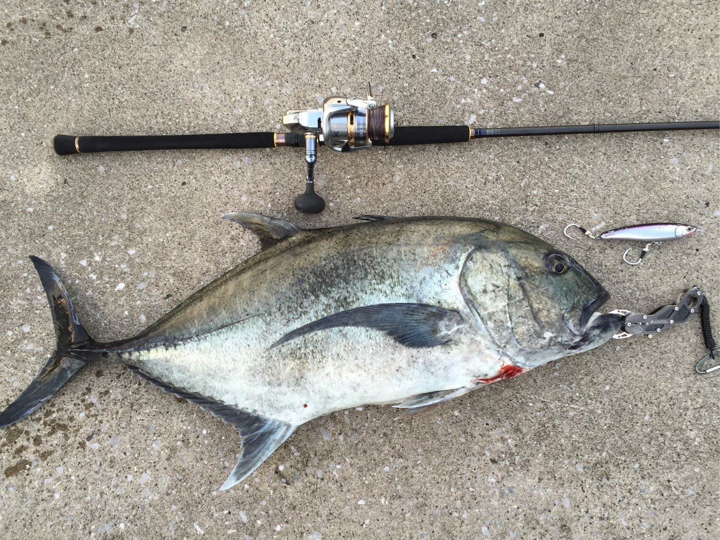 ヨウスケさんの投稿画像,写っている魚はロウニンアジ