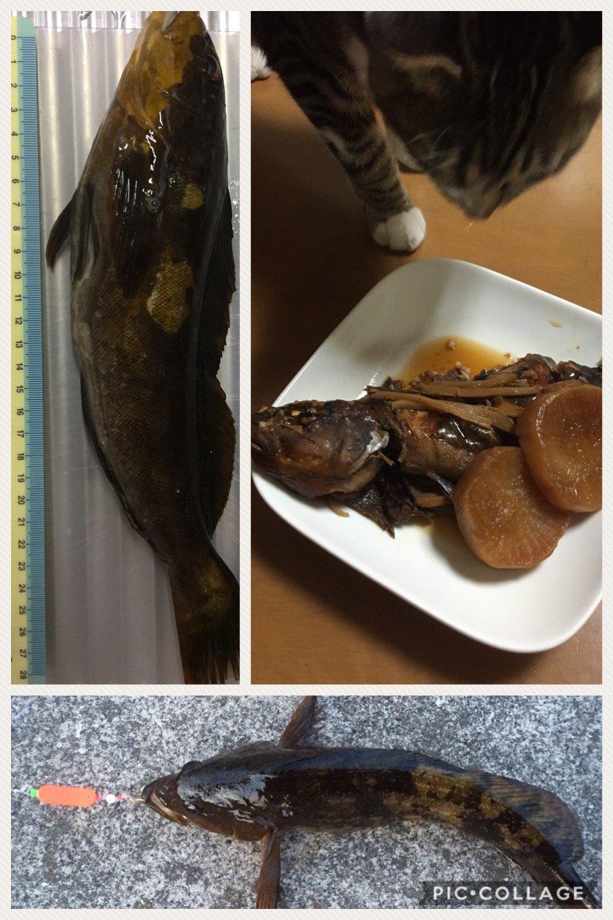ふみやさんの投稿画像,写っている魚はアイナメ
