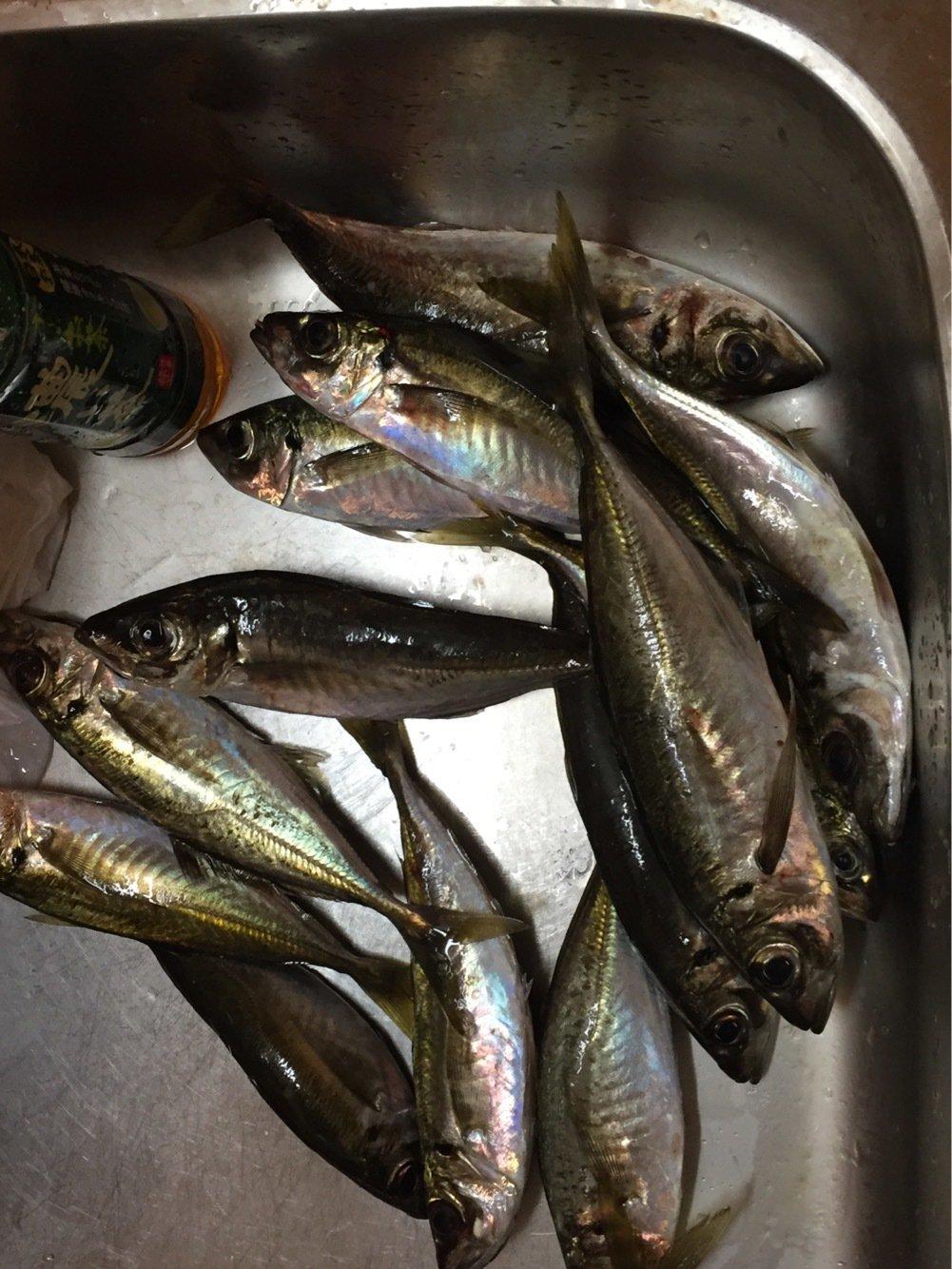 吉ぞーさんの投稿画像,写っている魚はアジ