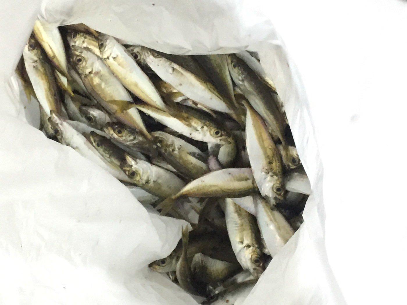 trumpeterhiro さんの投稿画像,写っている魚は