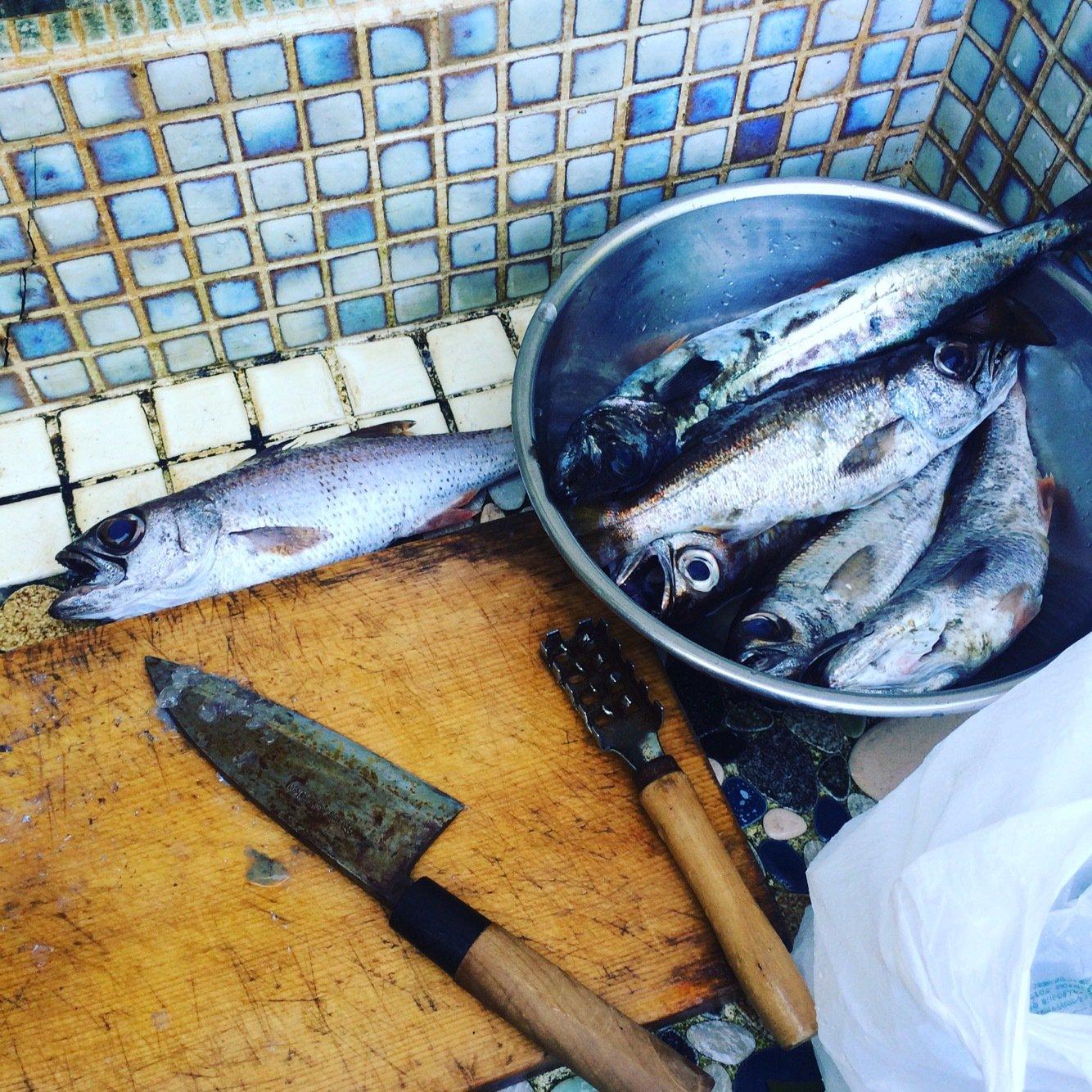Esakuさんの投稿画像,写っている魚はクロムツ