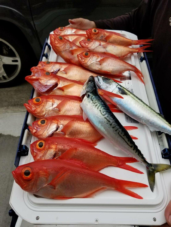 たまさんの投稿画像,写っている魚は