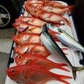 たまさんの福島県大沼郡での釣果写真