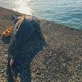 Enoさんの北海道苫小牧市でのカジカの釣果写真