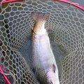 猫田大猫さんの滋賀県犬上郡での釣果写真