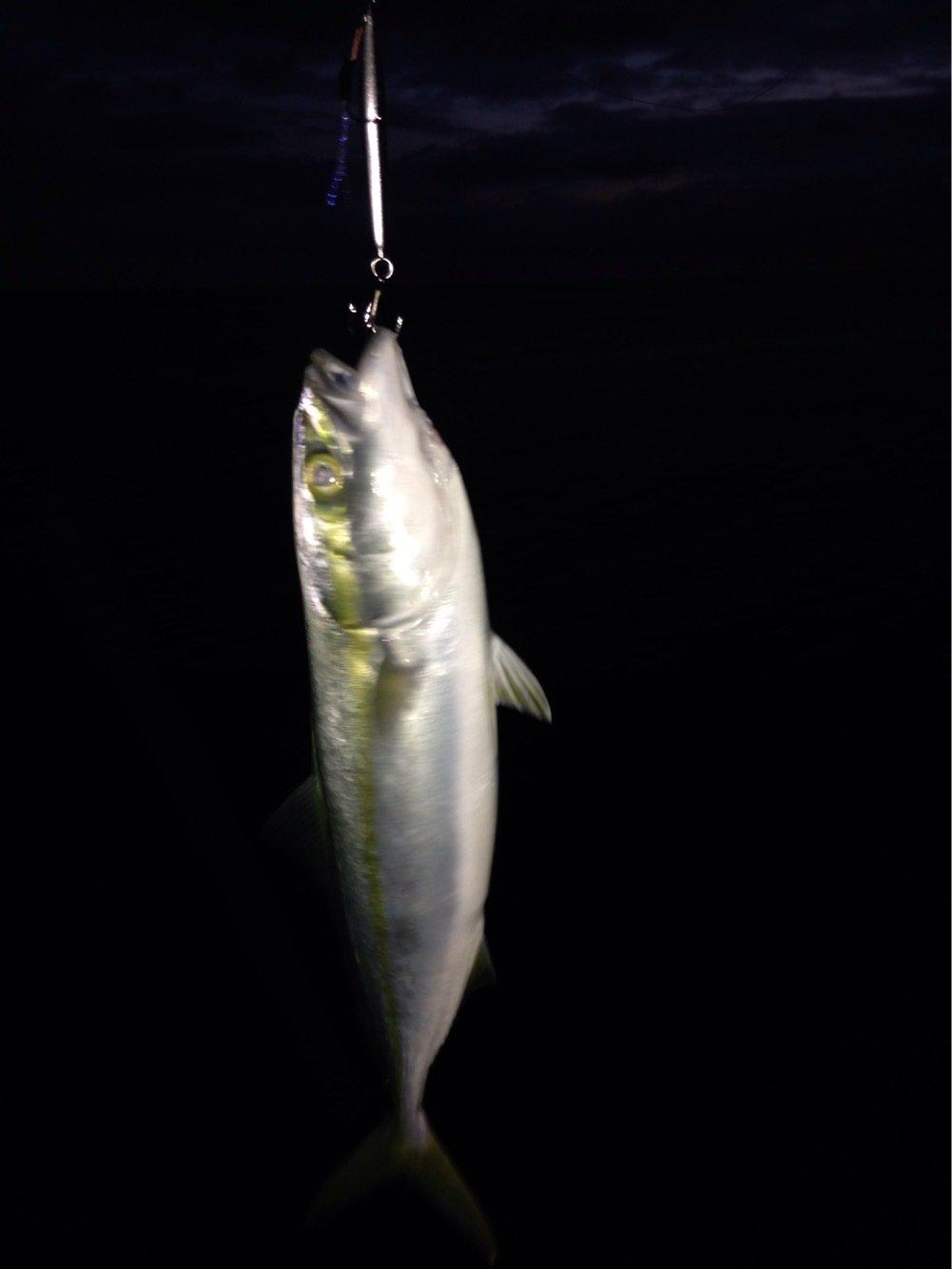 ヒロノリさんの投稿画像,写っている魚はブリ