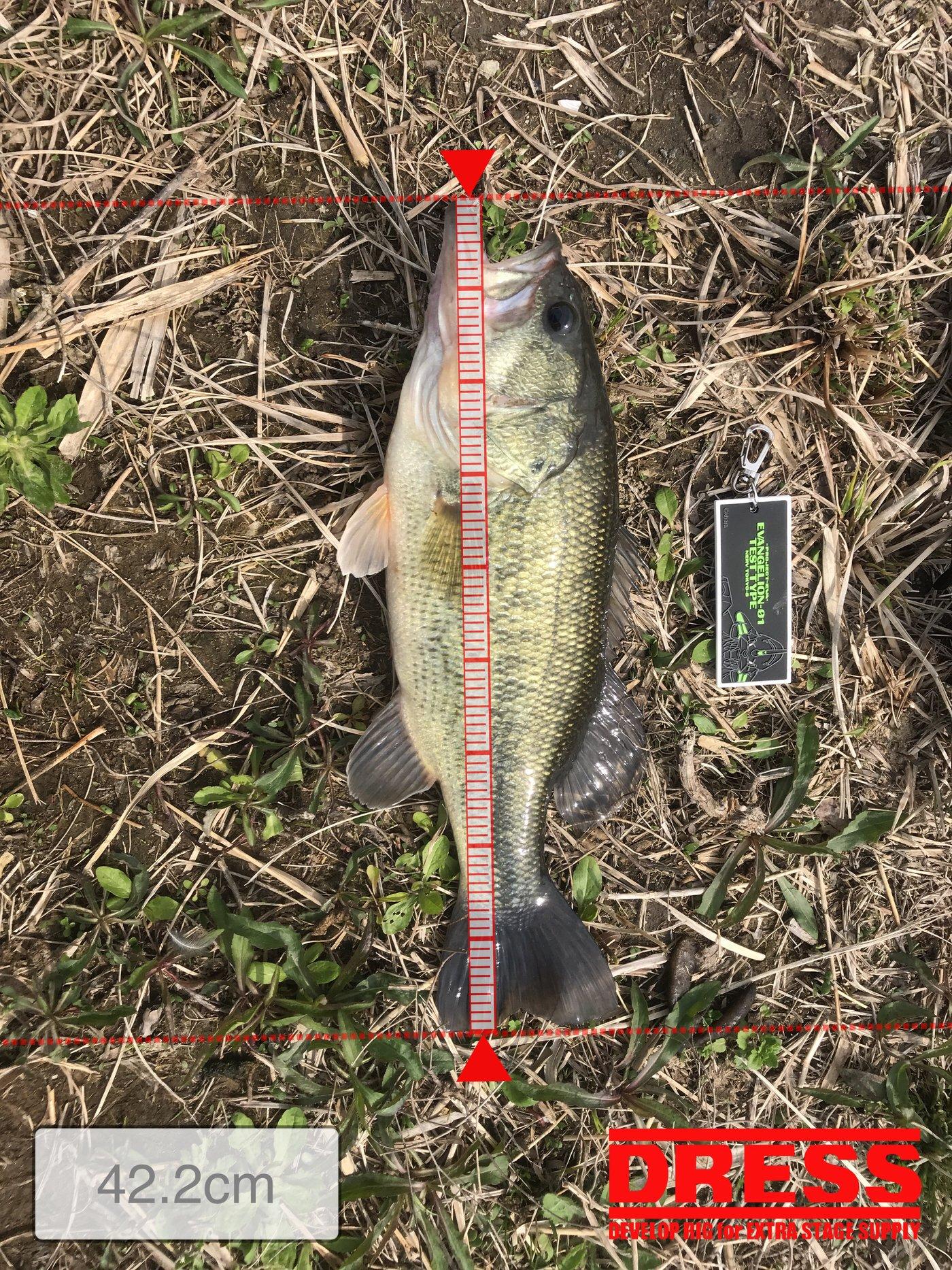 まぁすけさんの投稿画像,写っている魚はブラックバス