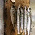 やまーん5056さんの奈良県生駒市での釣果写真
