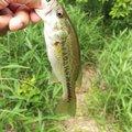 フルフルさんの兵庫県小野市での釣果写真