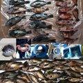 だいすけさんの福岡県でのキュウセンの釣果写真