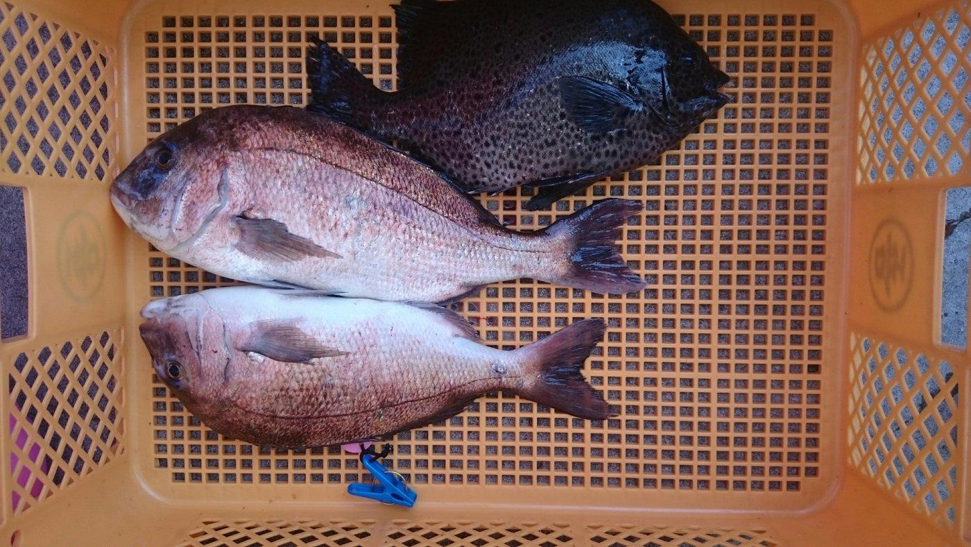 つさんの投稿画像,写っている魚は