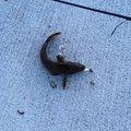 ひろしさんの宮城県東松島市でのアイナメの釣果写真