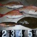 ゴールドさんの鹿児島県曽於市での釣果写真