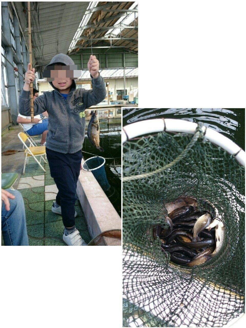 ゆじさんの投稿画像,写っている魚はコイ