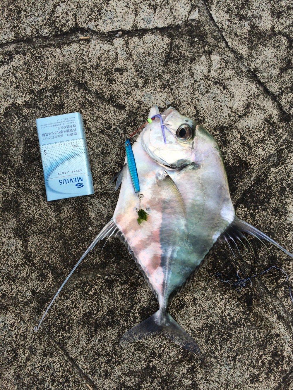 浜風さんの投稿画像,写っている魚はイトヒキアジ