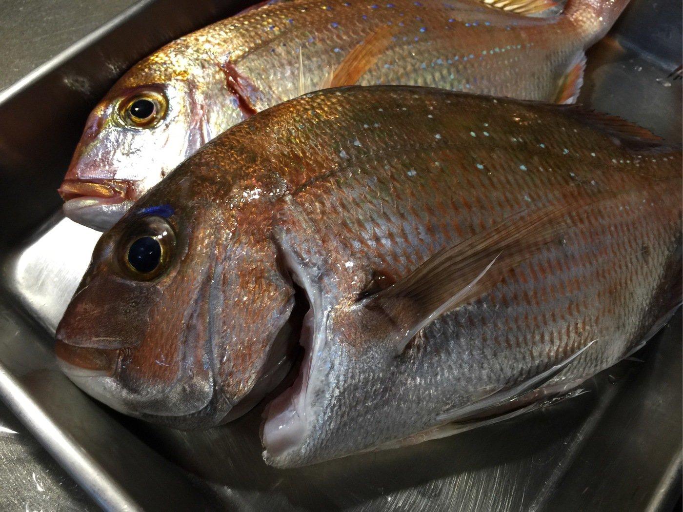 fish hunter 8号さんの投稿画像,写っている魚はマダイ