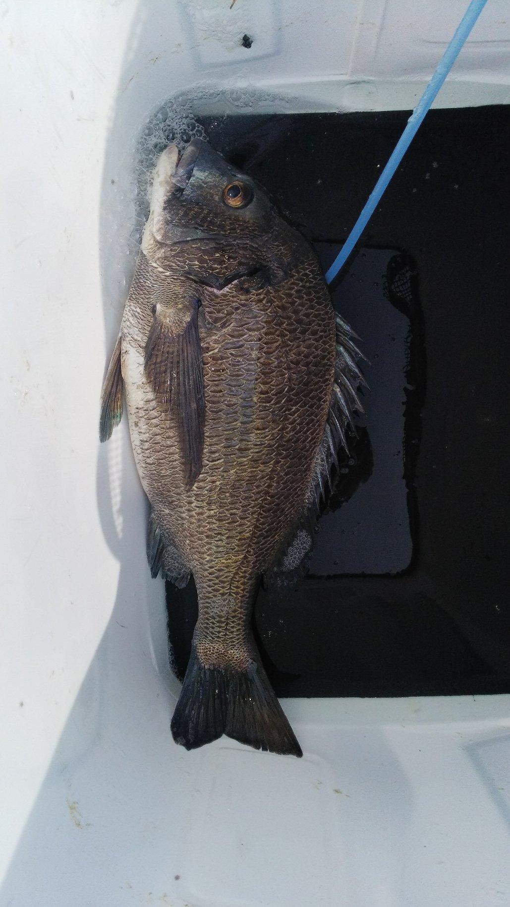 ミヤビパパさんの投稿画像,写っている魚は