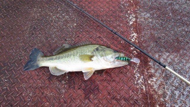 山田さんの投稿画像,写っている魚はブラックバス