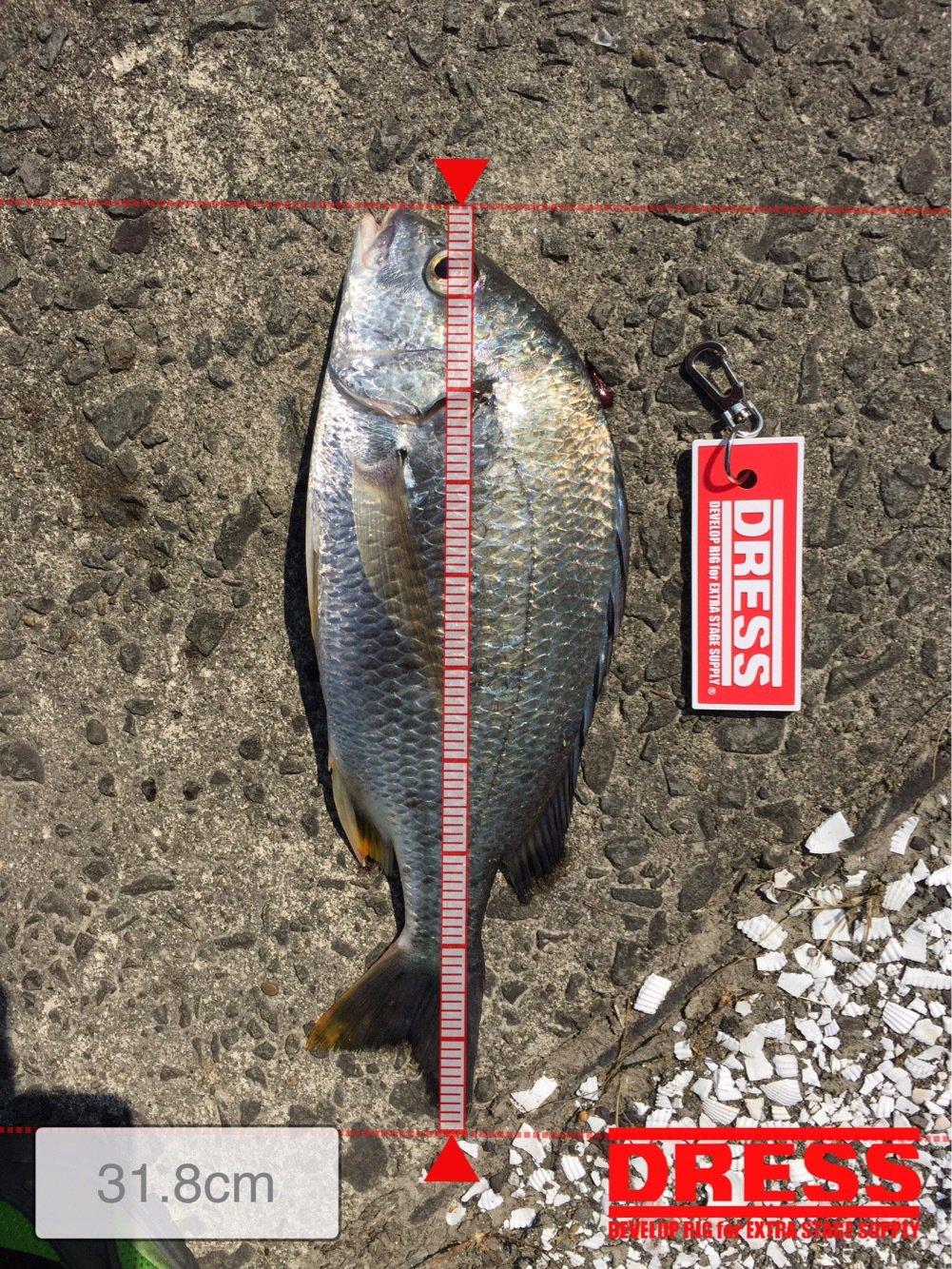 (≧∇≦)さんの投稿画像,写っている魚はキチヌ