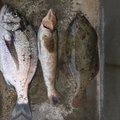 Macさんの大分県杵築市での釣果写真