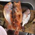 ボタヤマさんの福岡県飯塚市での釣果写真