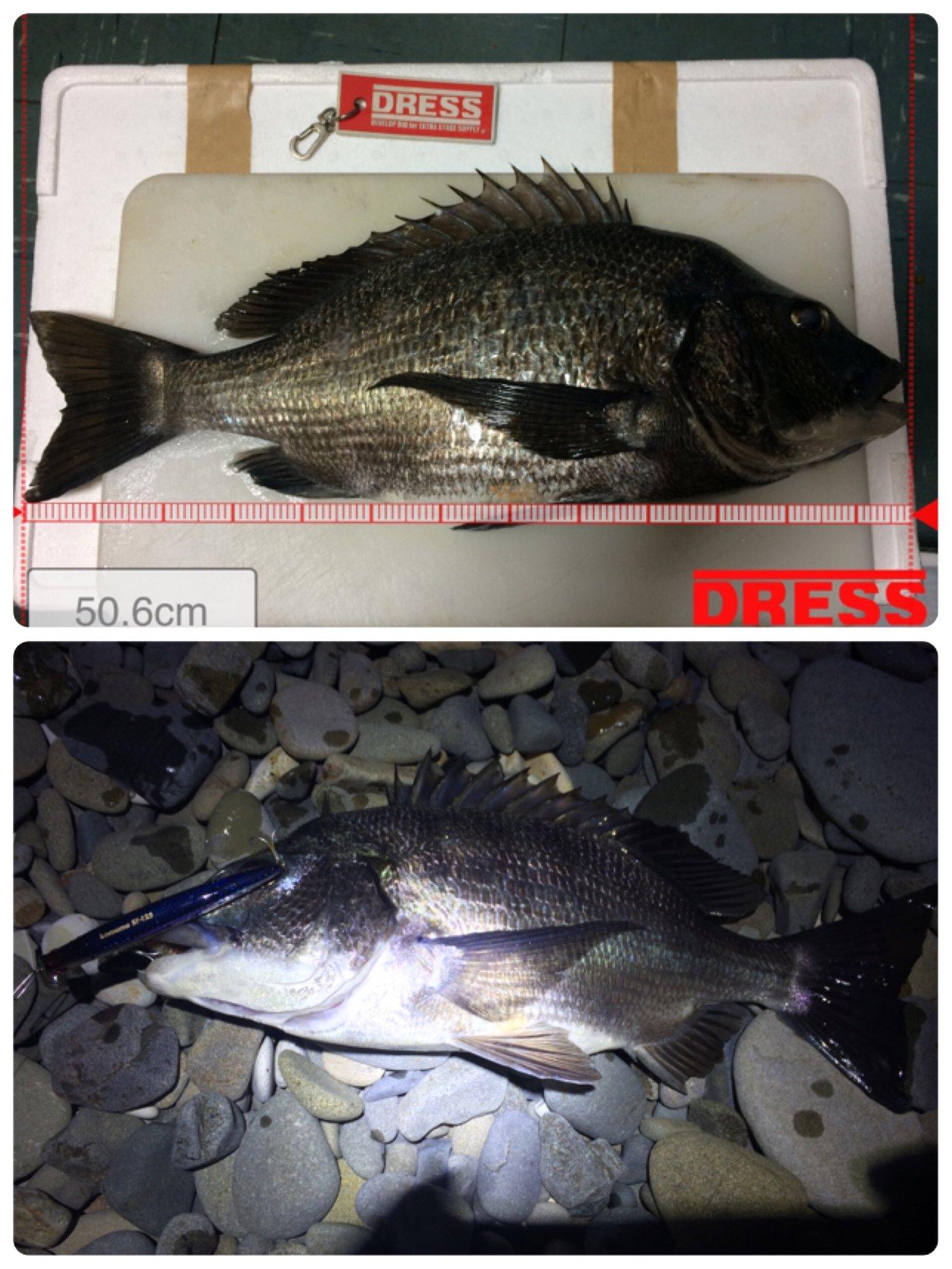 SBHさんの投稿画像,写っている魚はクロダイ,