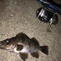 百姓漁師さんの茨城県高萩市での釣果写真
