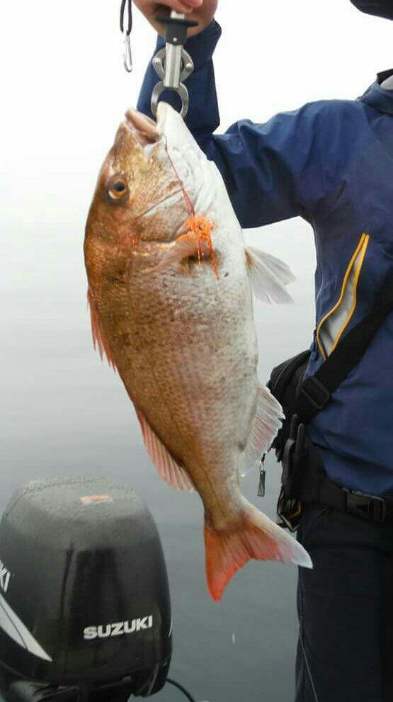 たひらさんの投稿画像,写っている魚はマダイ