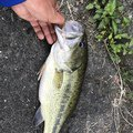 YTS397さんの大分県宇佐市での釣果写真