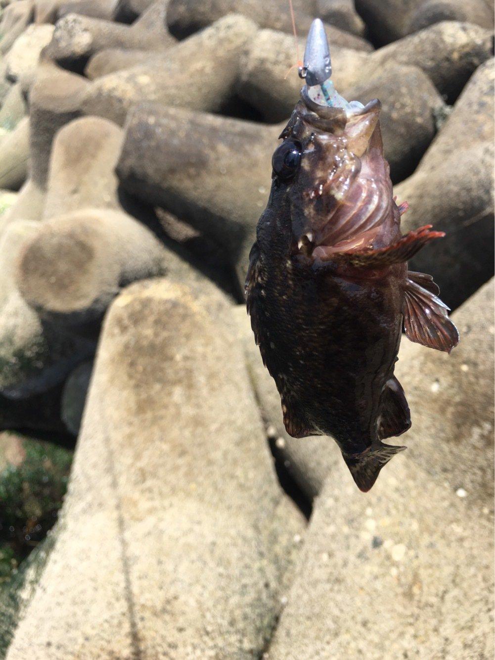 じゅんやさんの投稿画像,写っている魚は