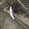 てつおTVさんの神奈川県足柄下郡での釣果写真
