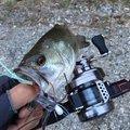 ニゴイさんの千葉県白井市での釣果写真