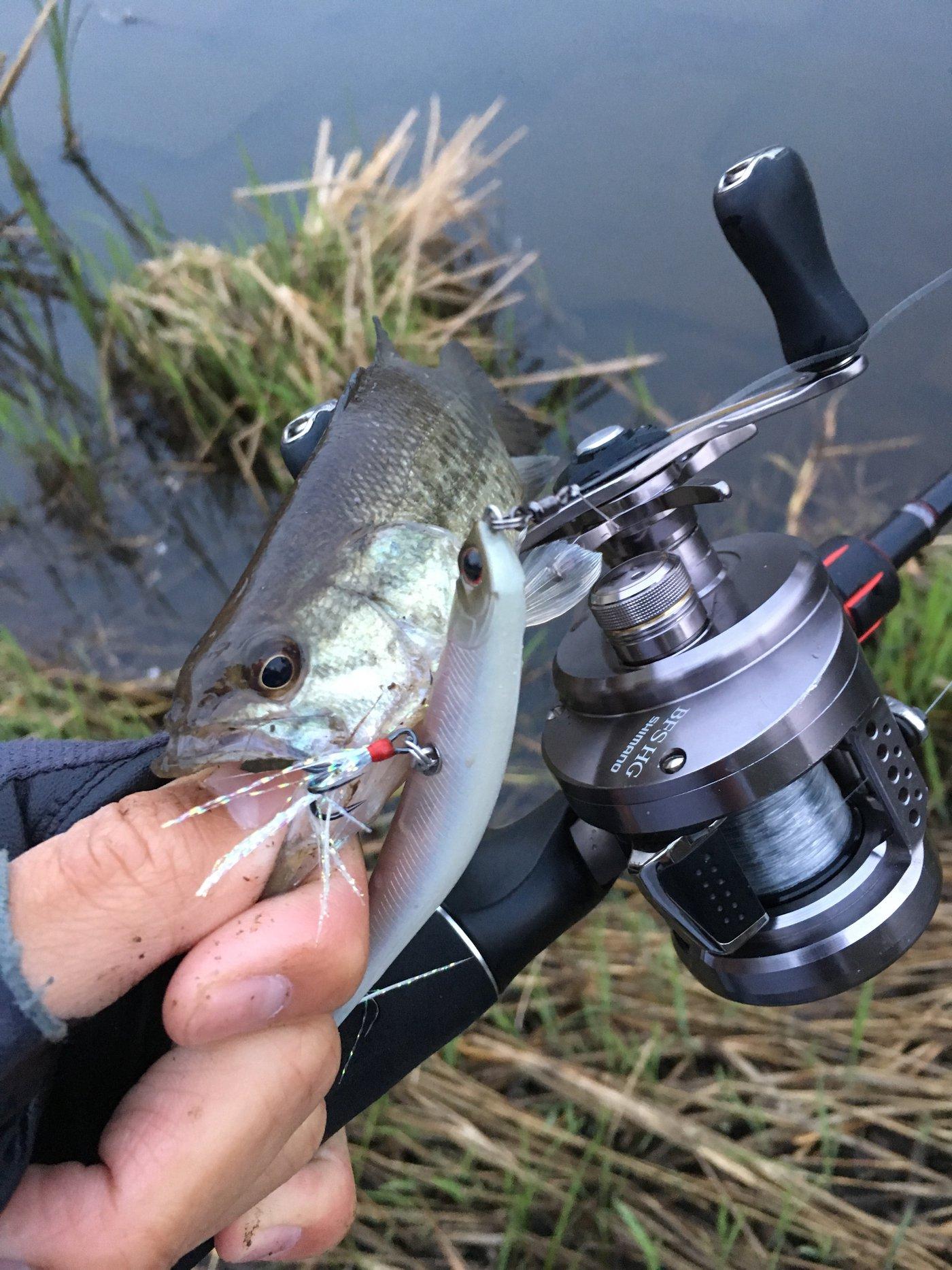 ニゴイさんの投稿画像,写っている魚はブラックバス