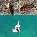 かリんさんの神奈川県足柄上郡での釣果写真