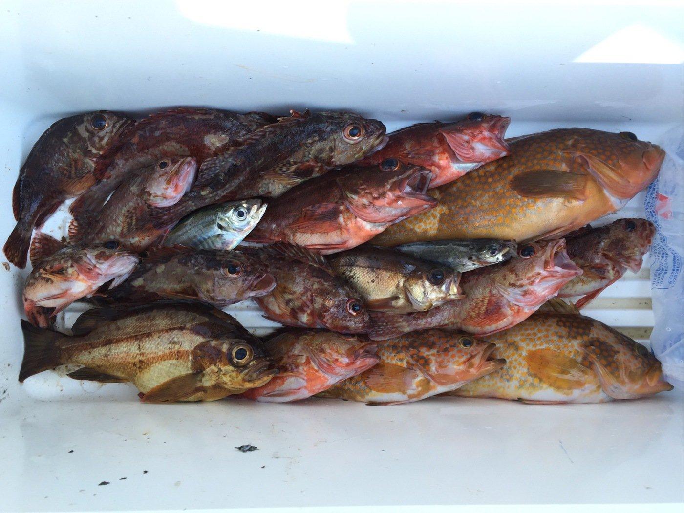 cpcnv100さんの投稿画像,写っている魚はキジハタ