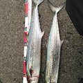 まごちさんの鳥取県米子市での釣果写真