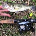わかさんの岐阜県岐阜市での釣果写真