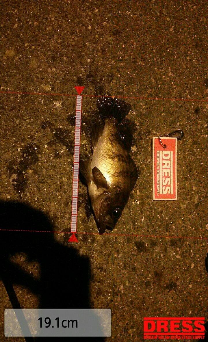 とらいぜっと(瀬戸智宏)さんの投稿画像,写っている魚はメバル