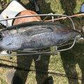 りょうすけさんの宮崎県児湯郡での釣果写真