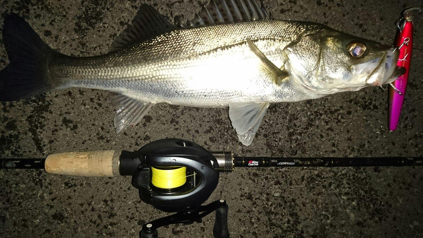 y*ukiさんの投稿画像,写っている魚はスズキ