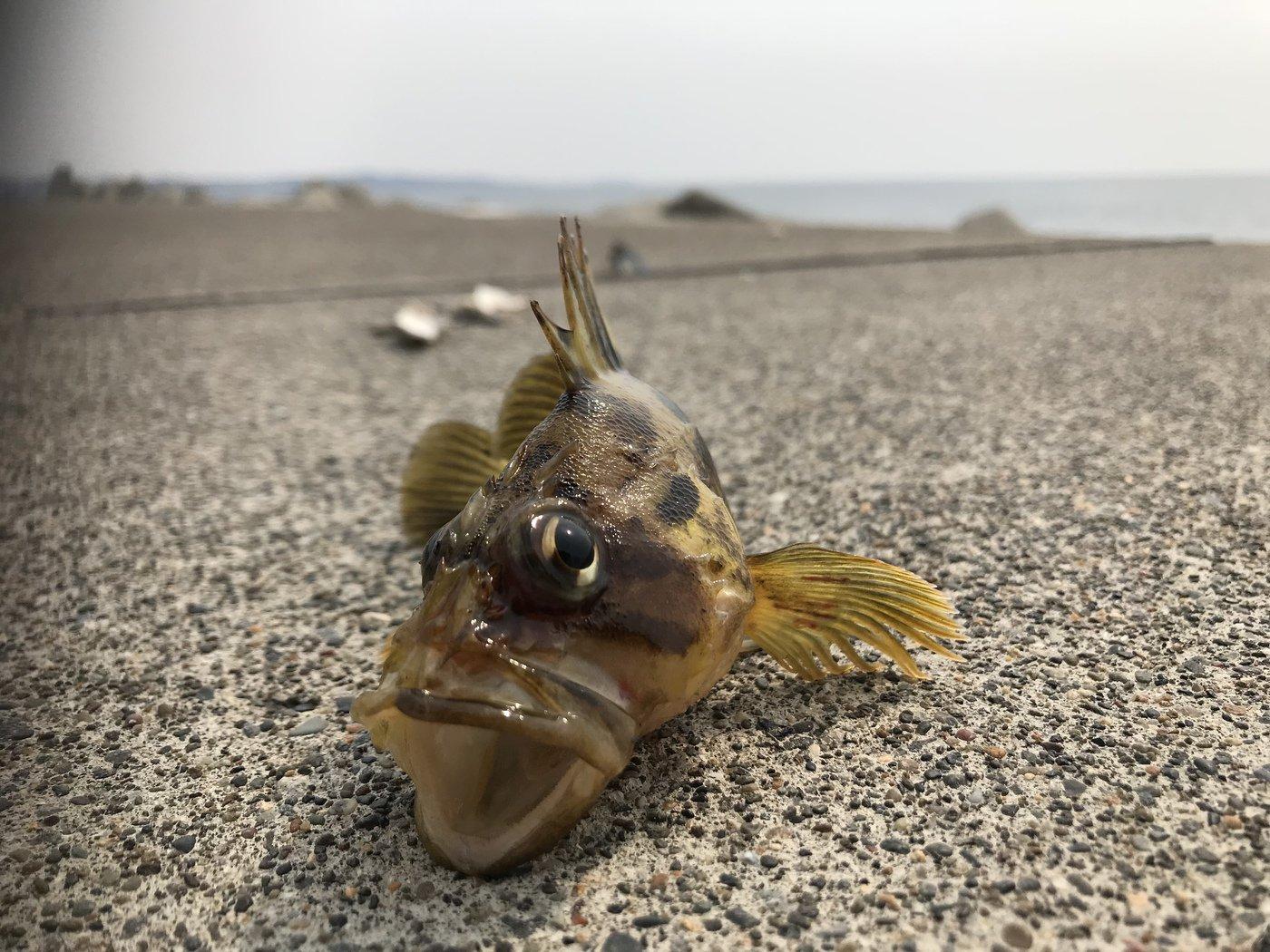 釣り之さんの投稿画像