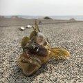 釣り之さんの北海道有珠郡での釣果写真