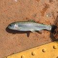 MARCYさんの埼玉県川越市での釣果写真
